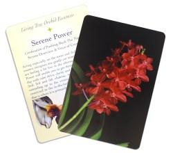 Large Tarot Cards